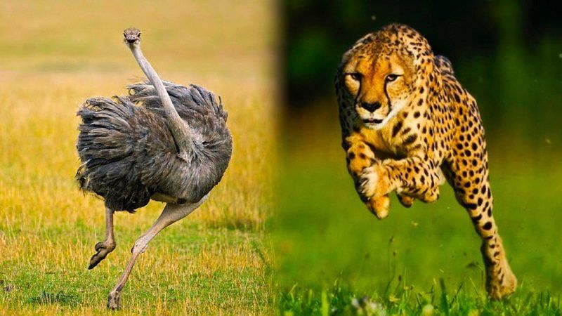 11+ Fastest animal on the planet ideas
