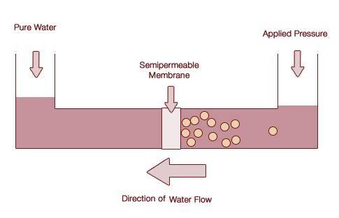 Venn Diagram Osmosis Schematic Diagrams