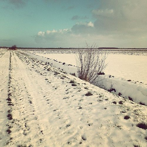 One day winter (Ter Apel, The Netherlands, 2014)