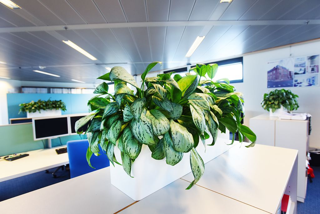 Plantenbak Op Kast Industrieel Inrichting Modern