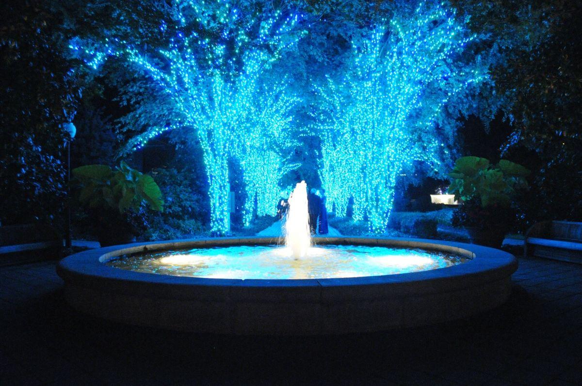Pin by Gardening Ideas on gardening lighting Holiday