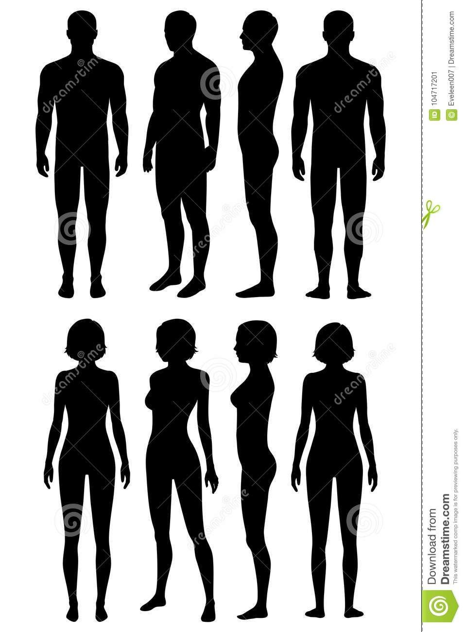 The Best Human Body Vector Hd