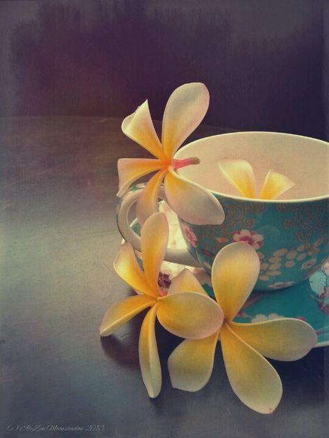 Frangipani Tea Google Search In 2020 Frangipani Flowers Photography Plumeria