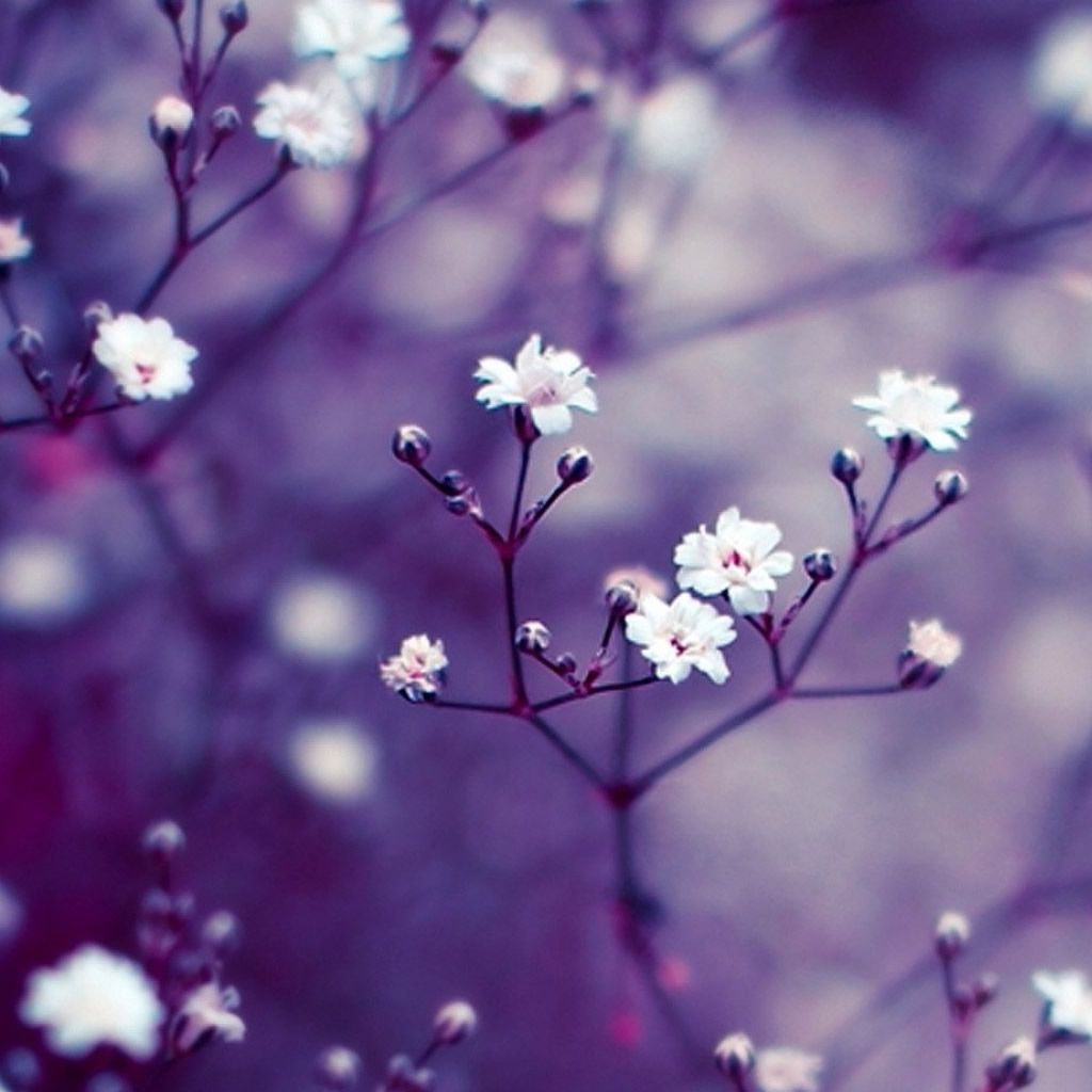 Wallpaper Iphone Background Beautiful Flowers