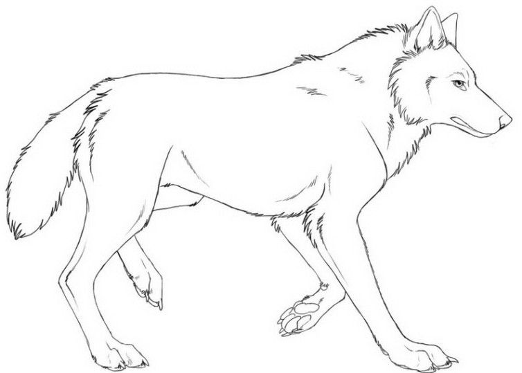 Malvorlagen Wolf 06 Malvorlagen Ausmalbilder Ausmalen