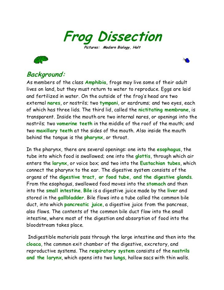 Frog Dissection Pictures Modern Biology HoltBackground As