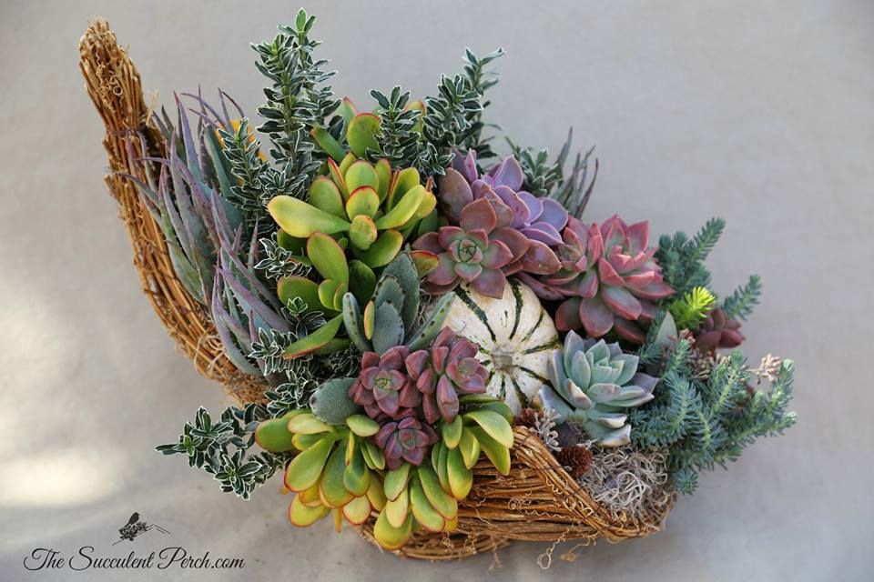 by Succulent Perch