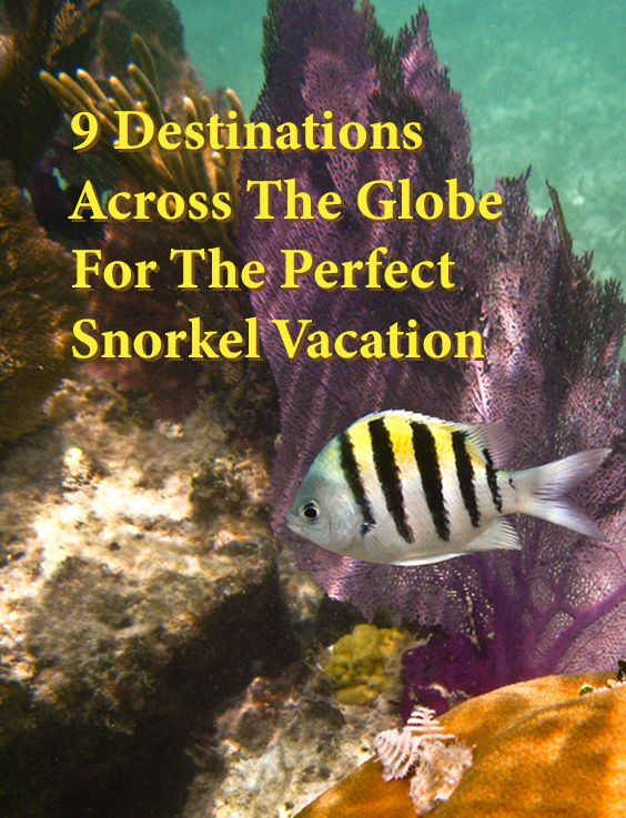 9 Destinations Across The Globe For The Perfect Snorkel