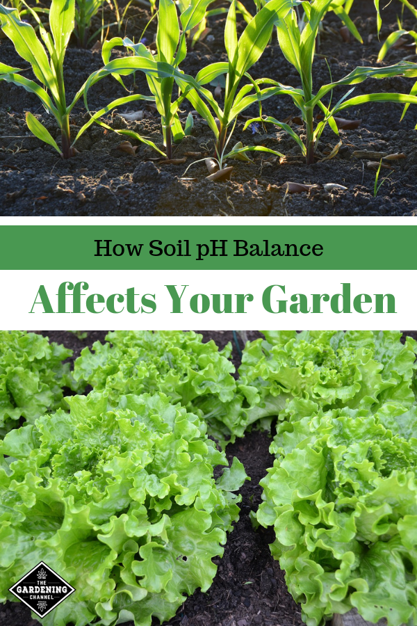 26a1c43663da247e161ab9861be38caa - How Does Ph Affect Plant Growth And Gardeners Gardens