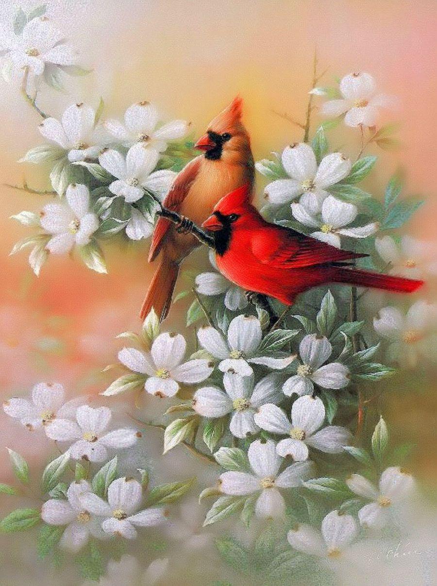 рисунки красивых птиц на цветах основе корня этого