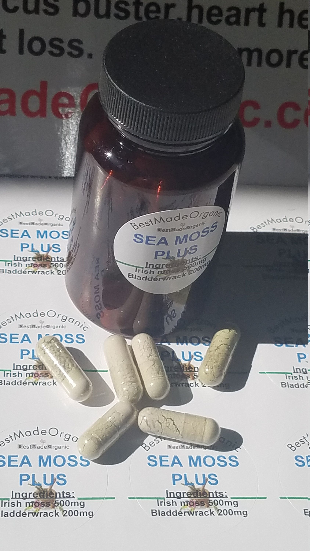 Sea Moss And Bladderwrack Capsules 100 Wild Crafted Irish Etsy Sea Moss Irish Moss Seamoss Benefits