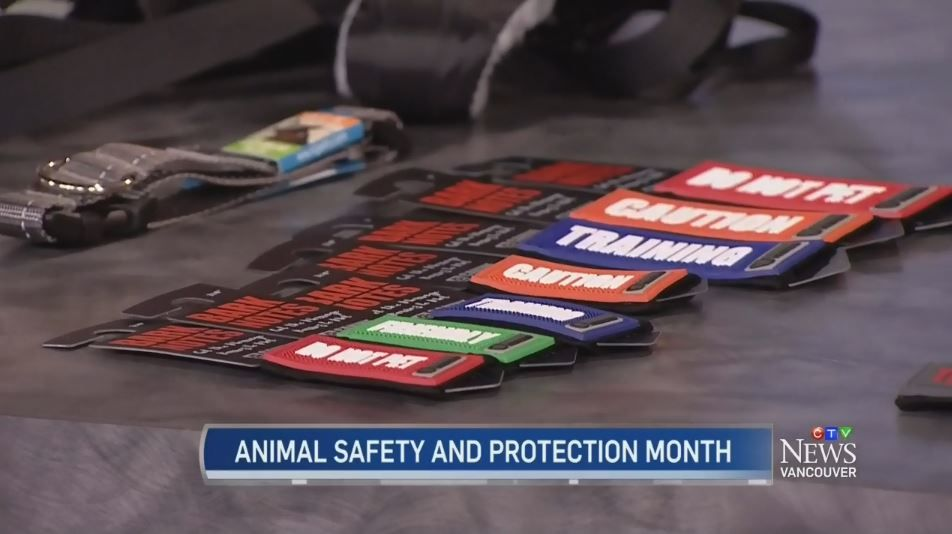 Oct 4, 2016 - Our Bark Notes were featured on CTV Vancouver. #BarkNotes #WestCoastRainwear #PetFirstAidKit