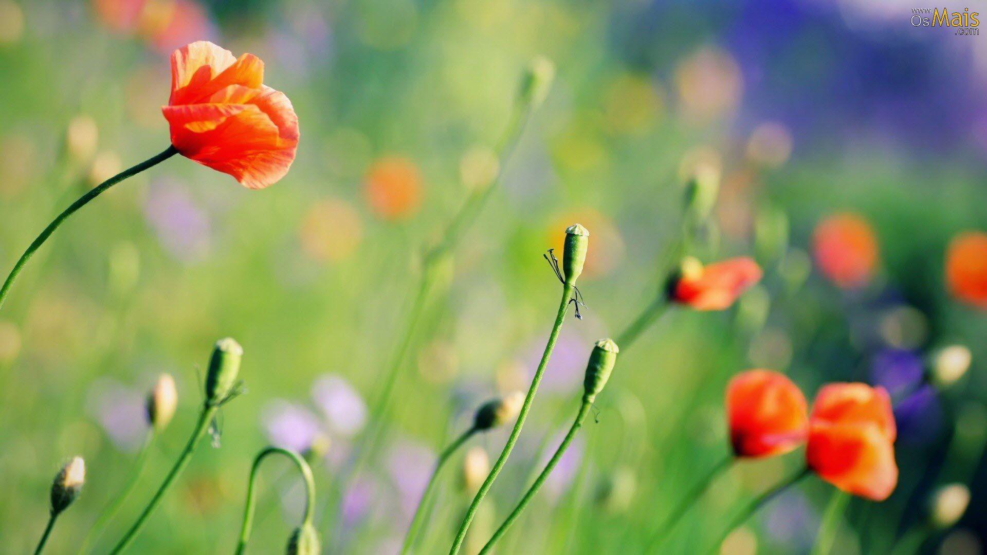 cuales son las primeras flores de primavera - Buscar con Google
