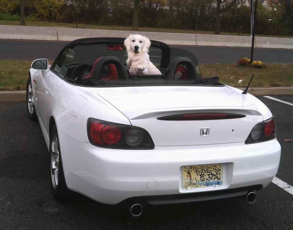 White Golden Retriever Puppies Ct Akc Certified Holistic Nj Md Ma Pa De Ny Ca Az Tx Fl Ri Or Wa English