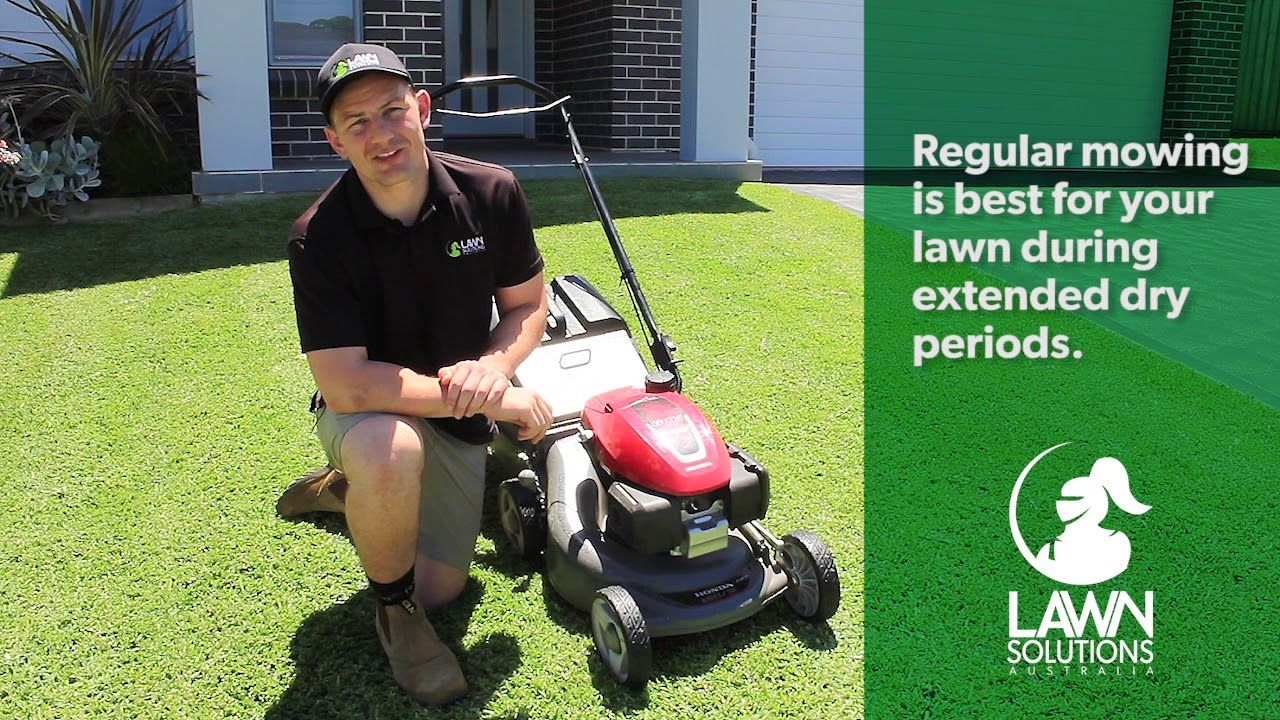 Helpful summer lawn care tips summer lawn care lawn