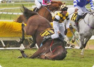 Animal racing betting games for the kentucky australian boxing betting lines