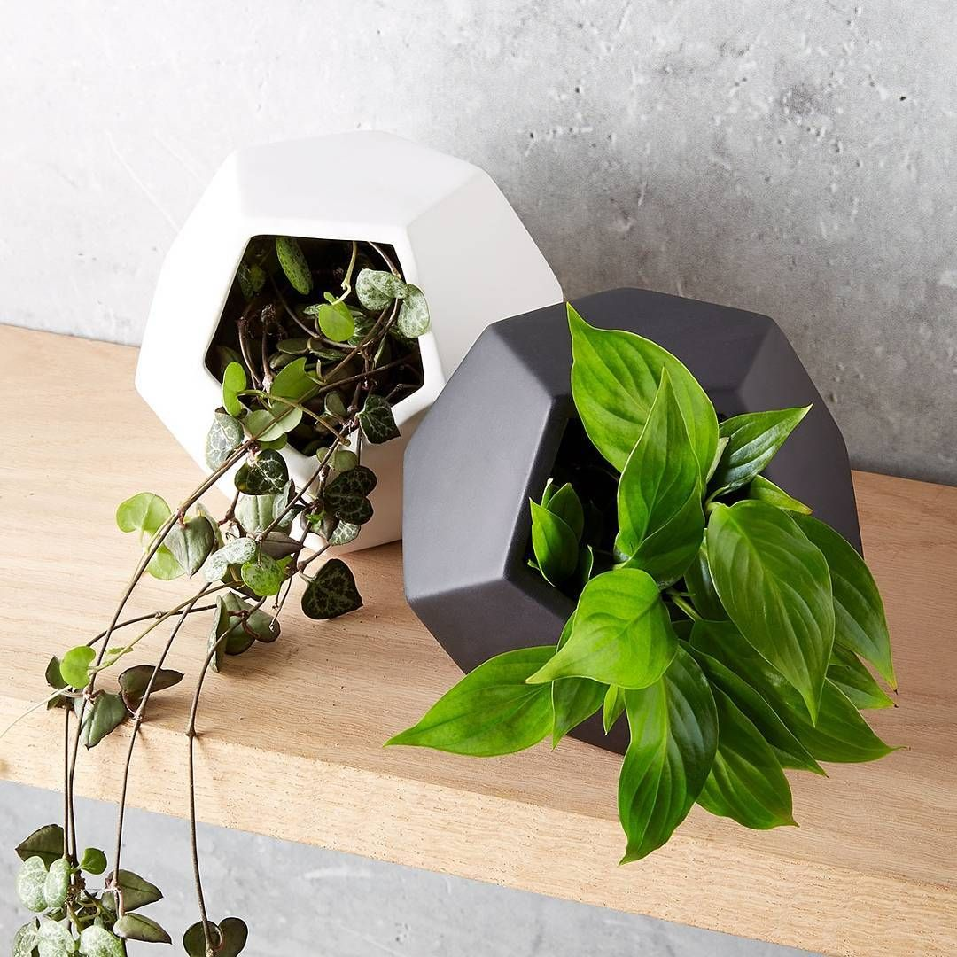 Go geo! Add style to any space with our $3 geo pots.  #kmartaus #kmartaustralia…