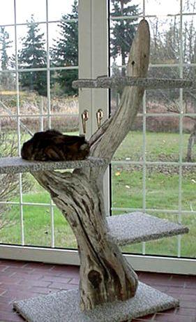 Cat Tree. DIY. Homemade for Cats.. Diy cat tree, Cat towers