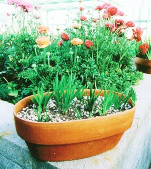 Basic Gardening Tool Tips For Beginners Hometalk Gardening