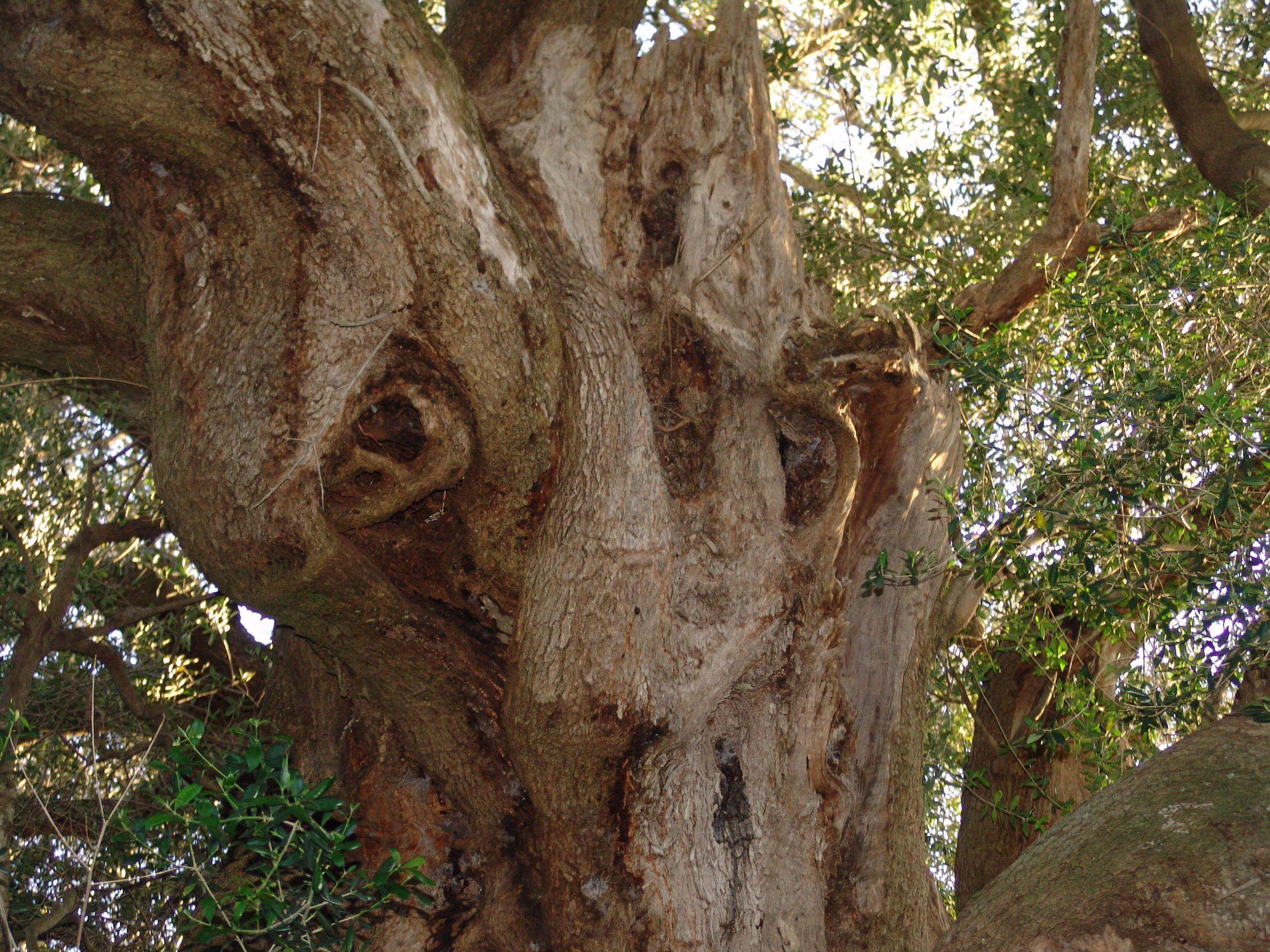 Contemporary Olive Garden Mays Landing Nj Sketch - Brown Nature ...