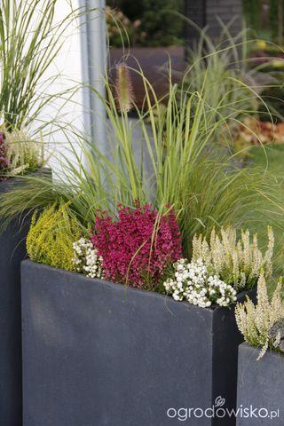 Galeria Zdjec Pomysly Na Jesienne Kompozycje W Donicach Ogrodowisko Plants Flowers Dekoration