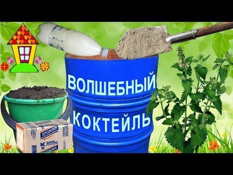 Картинки по запросу Стоит ли лечить растения содой, дрожжами и зеленкой?