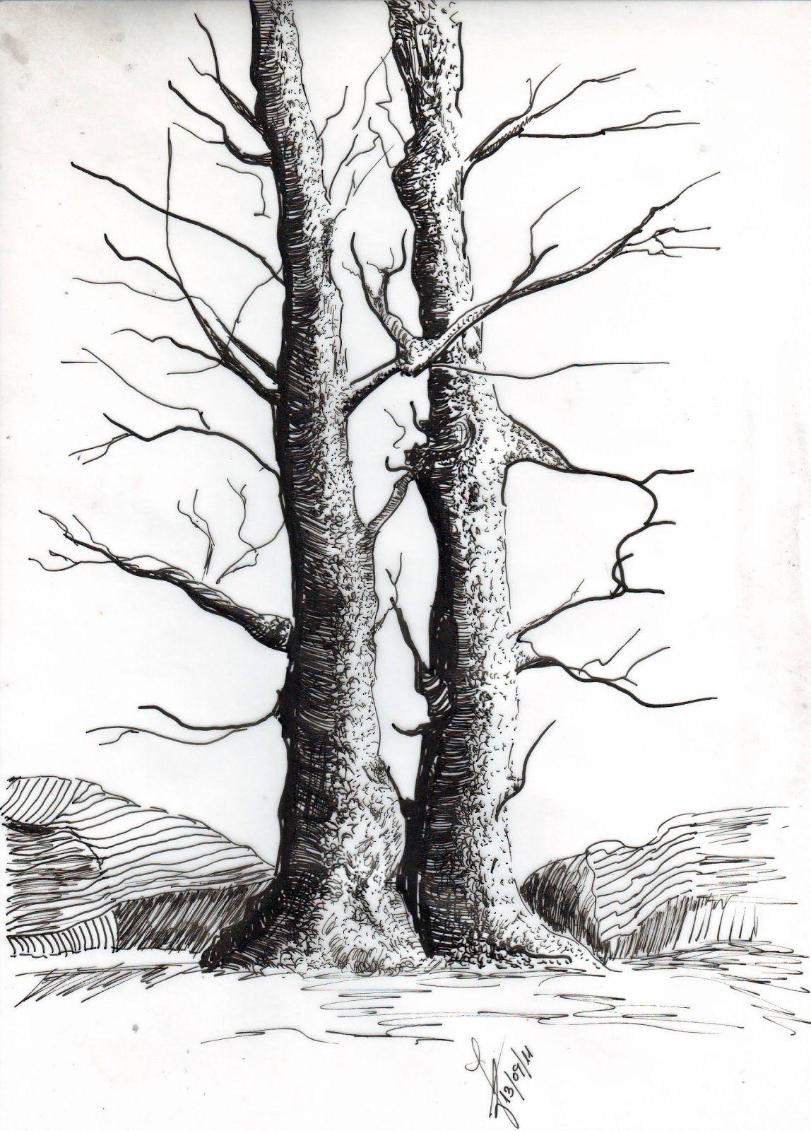 Imagen Relacionada Ramas De Arbol Dibujo Dibujos De Arboles Dibujos