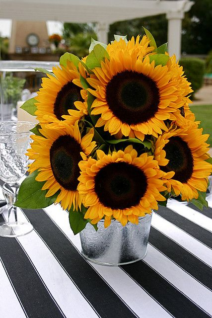 Sunflowers Girasoles Pinterest Girasoles Floral Y