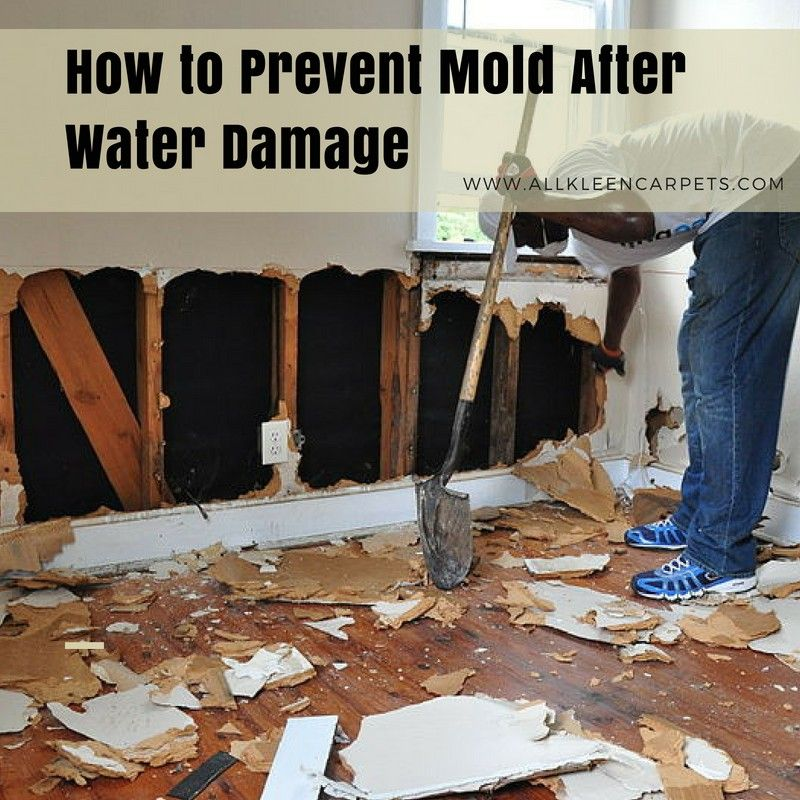 How to Prevent Mold After Water Damage How to clean carpet