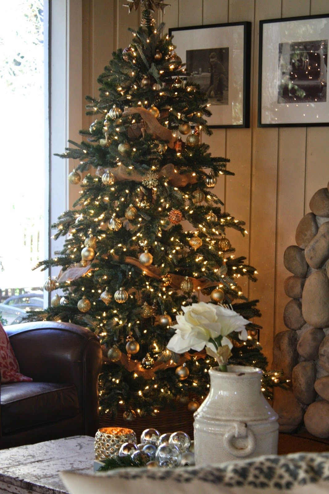 Pin by Barbara Struven on CHRISTMAS TREES | Pinterest | Firs ...