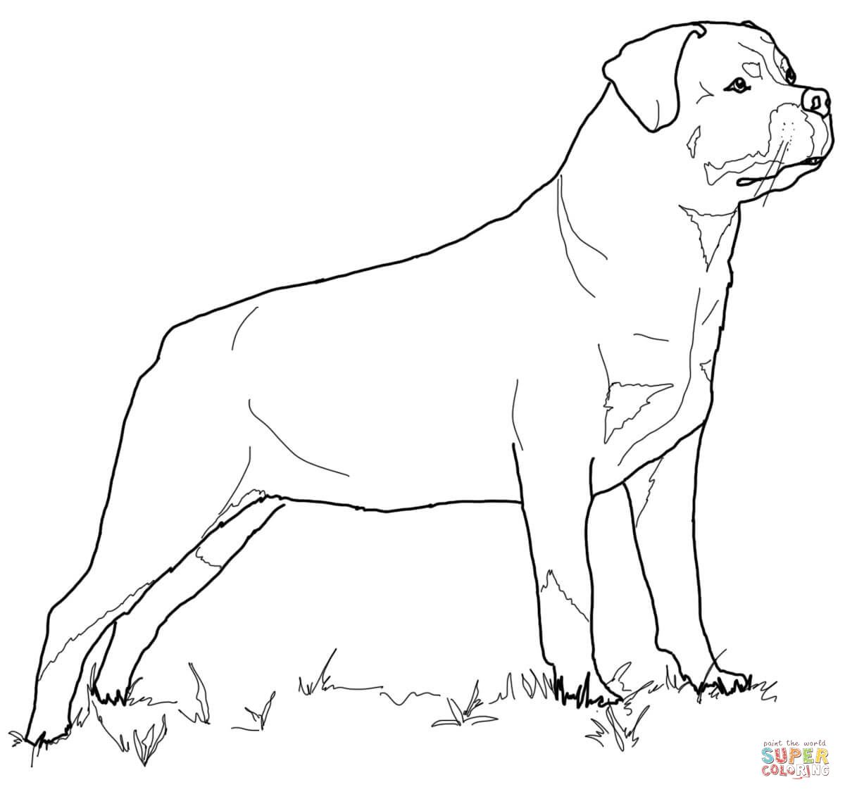 Rottweiler Super Coloring With Images Dog Coloring Book Dog