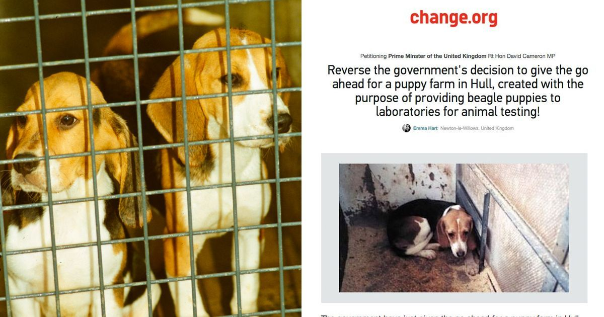 300 000 People Want David Cameron To Stop This Shameful Puppy