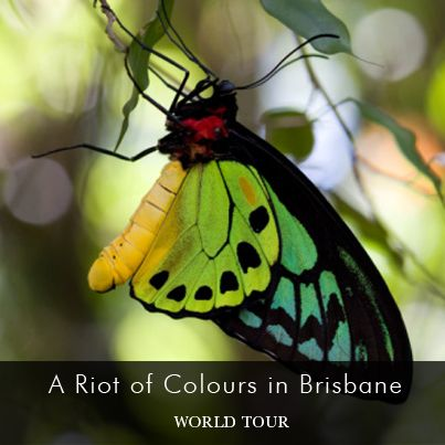 Jason visits Brisbane's nearby Tamborine Mountain to catch a sight of the many colorful butterflys and other exotic wildlife on his World Tour in Australia.