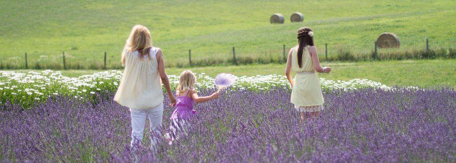 White Oak Lavender Farm - White Oak Lavender, PYO, afternoon