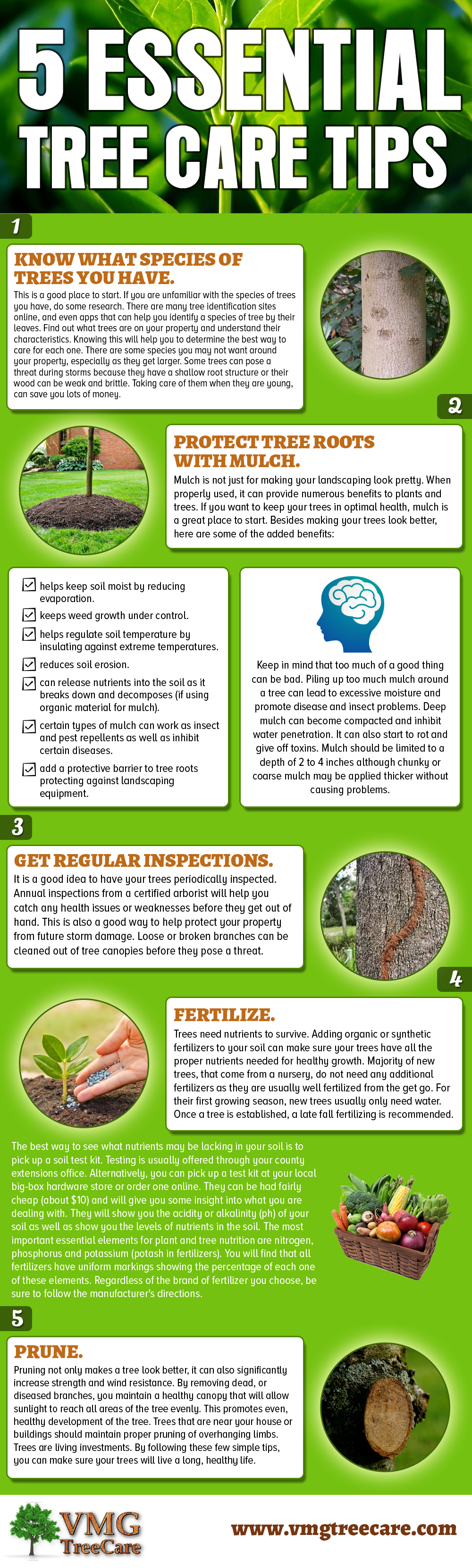cheap tree removal near me on 5 essential tree care tips tree care tree lopping tree removal service tree care tree lopping tree removal
