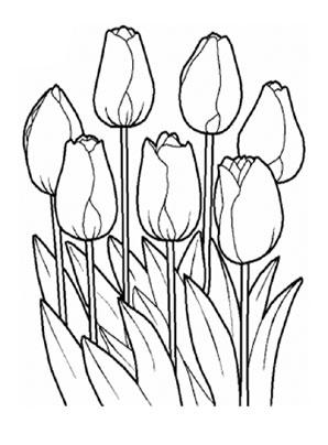 Ausmalbild Tulpen Zum Ausdrucken Und Ausmalen Ausmalbilder Malvorlagen Kindergarten Blumen Blumenzeichnung Blumenzeichnungen Blumen Ausmalbilder