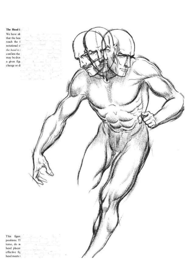 TORSO--- Dynamic Figure Drawing by Burne Hogarth, pg.55 | The ...
