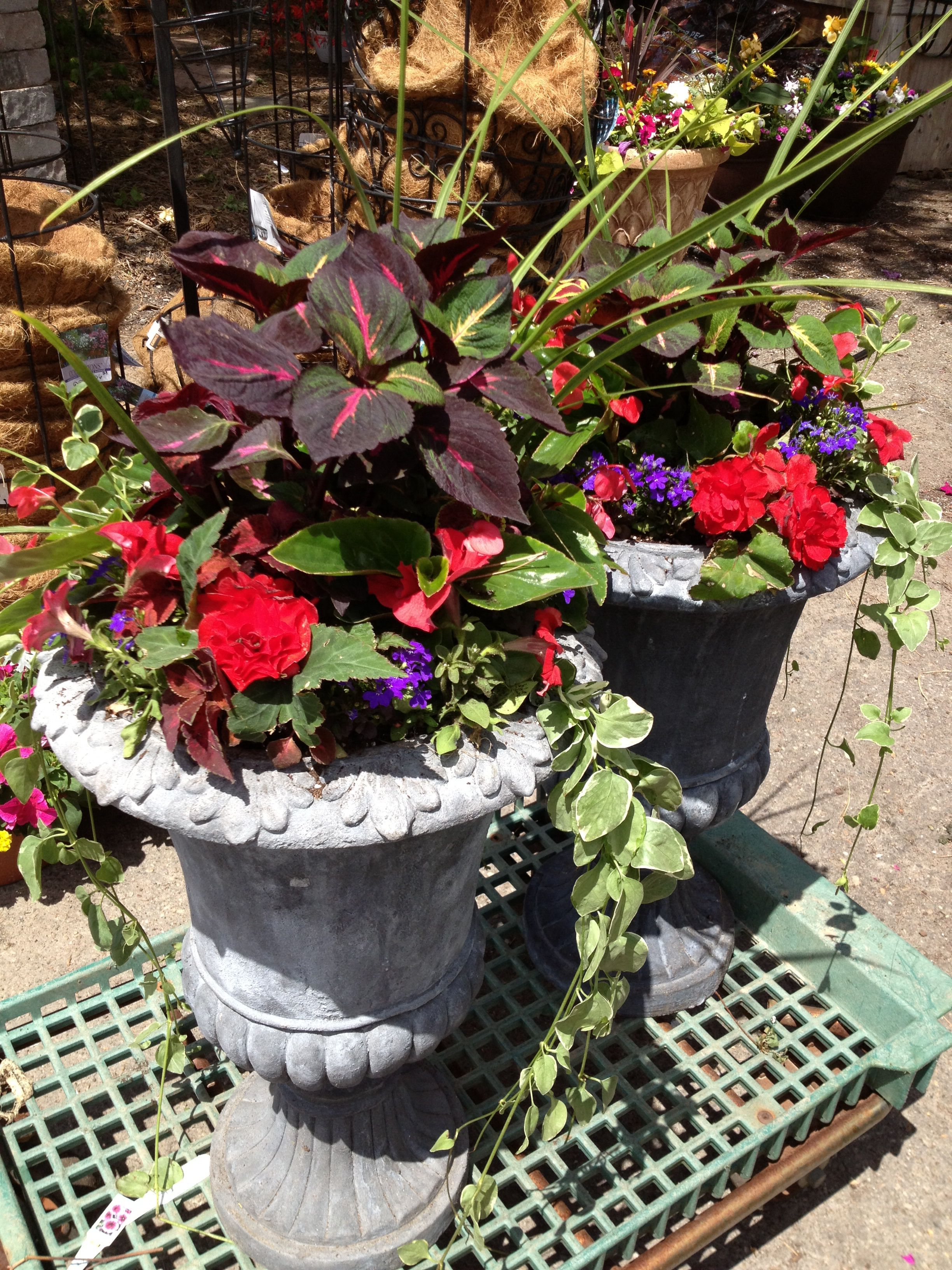 Red And Purple Shade Flowers Annuals Last Up To 6 Months Created