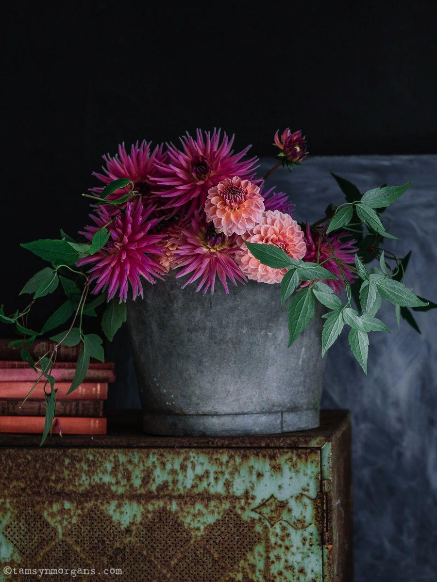 Tamsyn Morgans Divine Homegrown Dahlias Amazing Flowers Flower Arrangements Beautiful Blooms