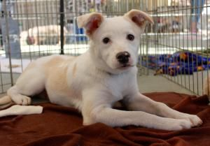 Adopt Chrysler Adopted On Animal Shelter Adoption Dog Lovers Animals Beautiful