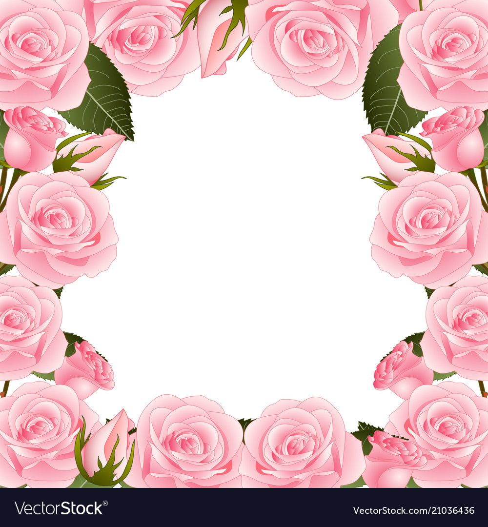 Pink Rose Flower Frame Border. isolated on White