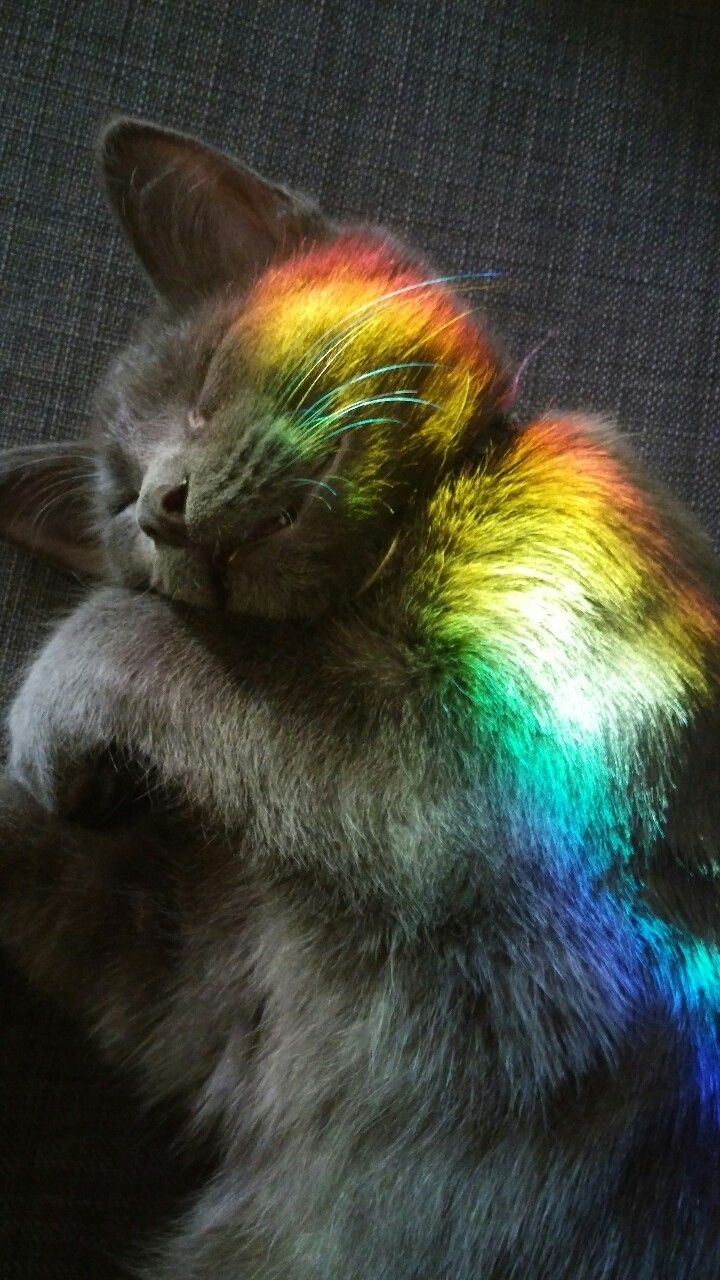 My Kitty Took A Nap In The Rainbow Created By My Sun Catcher So