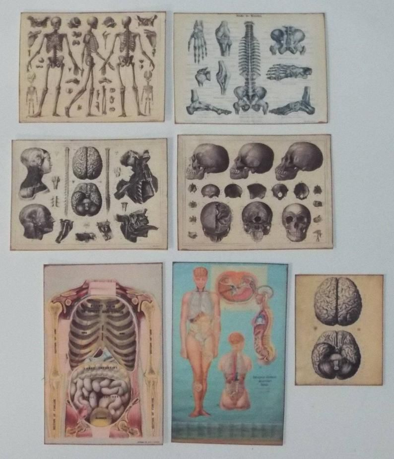 Dollhouse miniature handcrafted Antique medical posters 1/12th scale