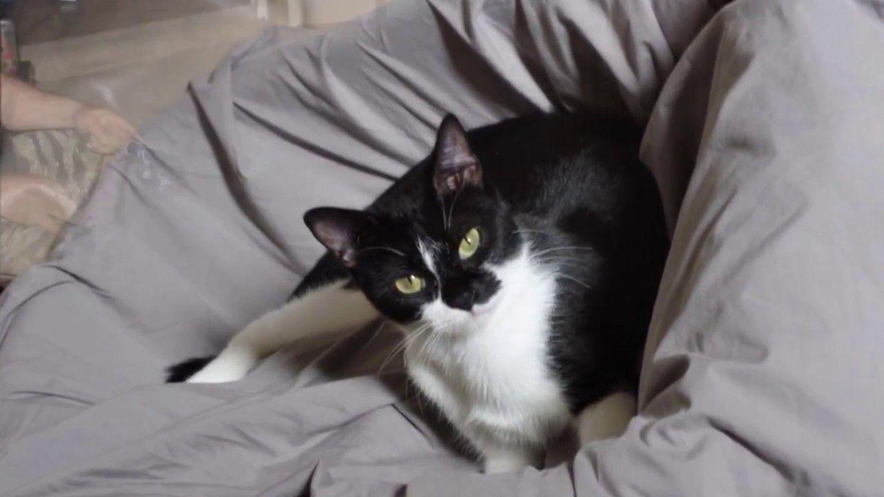 Kitty love molly cardieus pinterest kitten