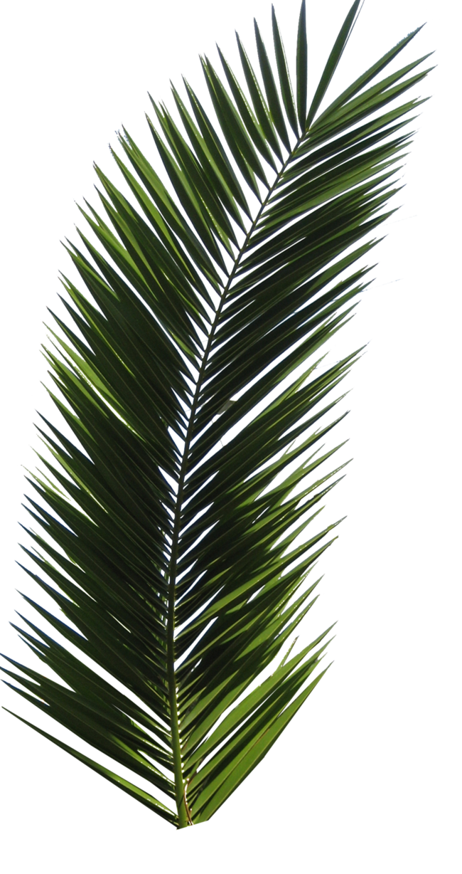 Palm Tree Tube Stock VI PNG By Digitaltwist On DeviantART IMAGENES Pinterest