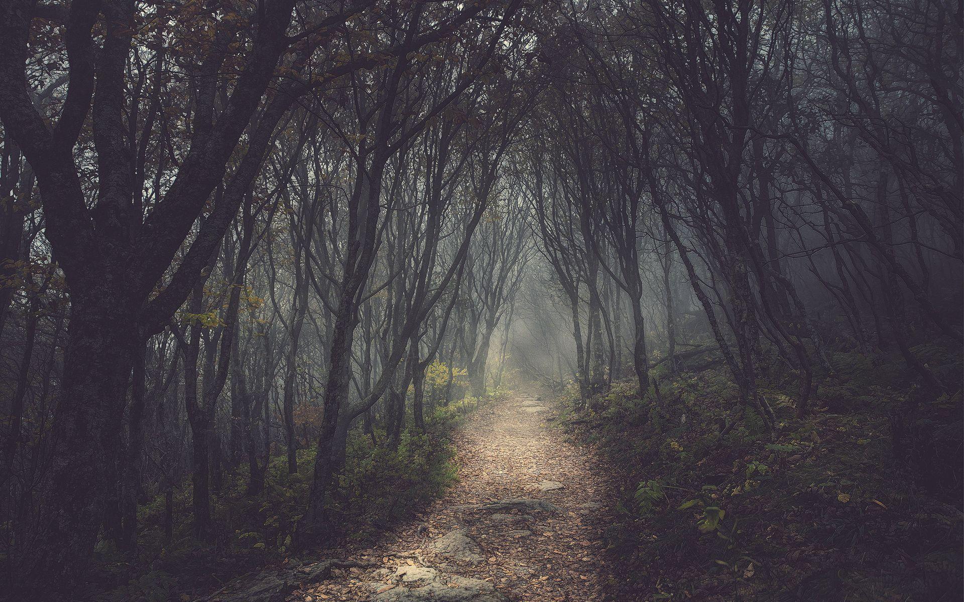 Dark Forest Path Background Viewing Gallery Dark Tree Forest Path Nature Wallpaper forest trees path dark evening