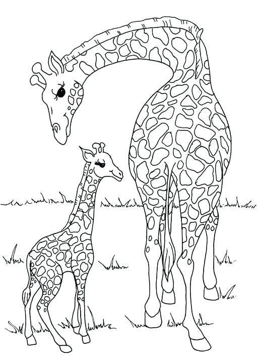jirafas para colorear para sol a para e jirafas para pintar ninos ...