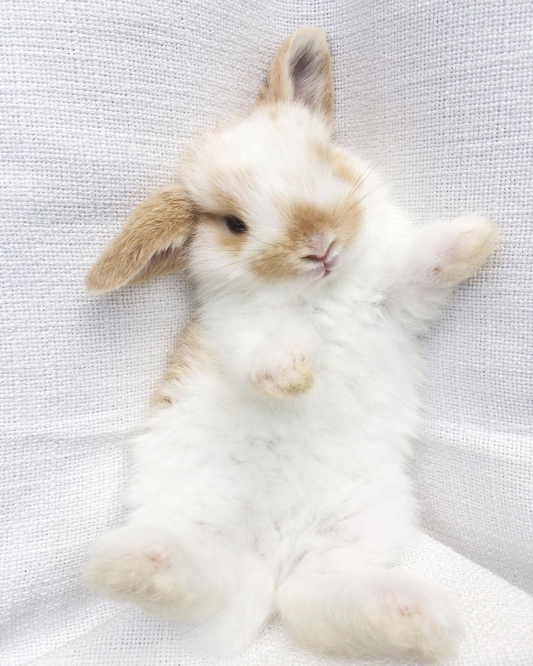 Animals And Nature Adorable Bunnies Baby Animals Funny Cute Baby Animals Fluffy Animals