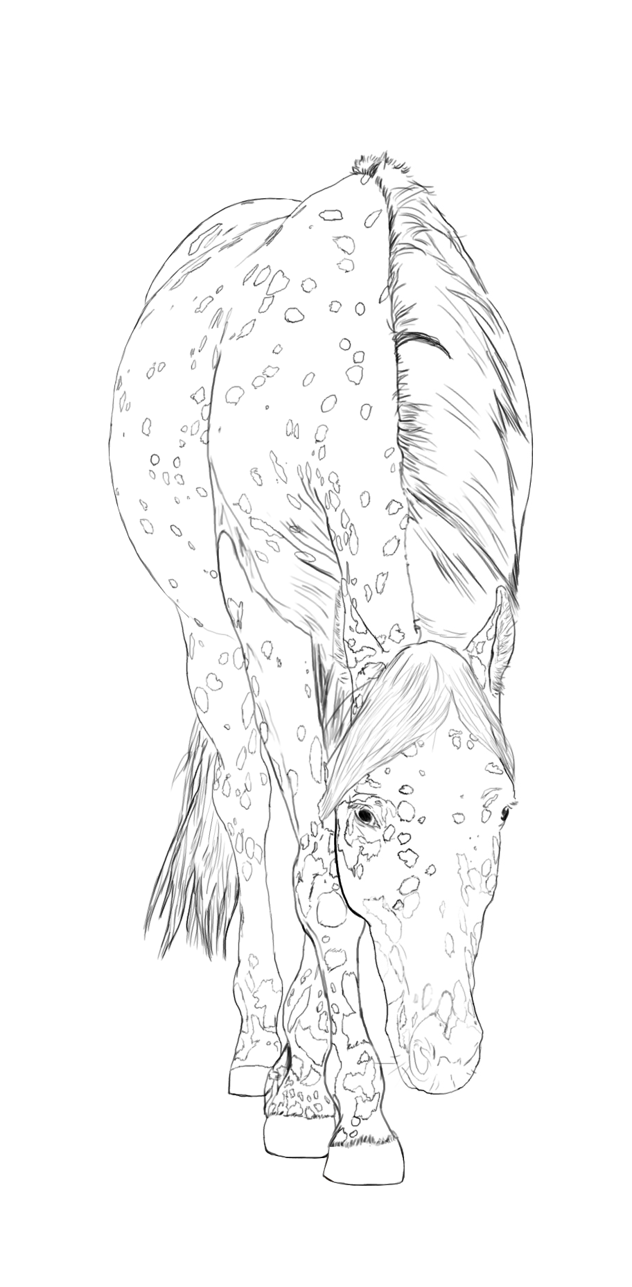 More Of My ArtAppaloosa Horse Line Art By StormsDestinydeviantart Kids ColoringColoring SheetsAdult