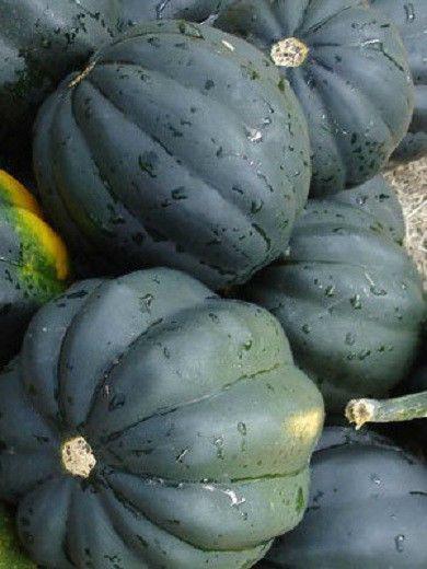 Pin By Grow Plants On Squash Pumpkin Squash Seeds 400 x 300